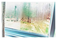 LetTheSunshineIn.... (Ele June) Tags: condensation letthesunshinein flikrfriday