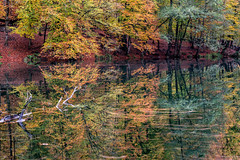 Dream or Reality (BeNowMeHere) Tags: ifttt 500px autumn color travel trip colorful colourful nature landscape fall colour turkey bolu dream reality fallcolours benowmehere dreamorreality yedigöller autumn2017