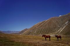 Kazbegi - vallée de Truso 16 (luco*) Tags: géorgie georgia haut caucase great caucasus kazbegi truso vallée valley montagnes mountains cheval chevaux horse horses flickraward flickraward5 flickrawardgallery