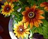 Flower Pot (jonnievt) Tags: fall flowerpot macro flowers