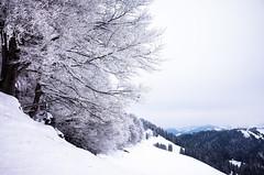 it's cold (gato-gato-gato) Tags: 28mm apsc alpen atzmaennig atzmännig berge oberland ricoh ricohgr schneeschuhe schneeschuhlaufen voralpen wandern wanderung winter zürcheroberland autofocus digital gatogatogato gatogatogatoch hiking mountaineering pointandshoot snapshot snowshoeing tobiasgaulkech wwwgatogatogatoch sanktgallenkappel sanktgallen schweiz ch mensch person human pedestrian fussgänger fusgänger passant switzerland suisse svizzera sviss zwitserland isviçre landschaft landscape landscapephotography outdoorphotography mountains mountain gebirge fels stein stone rock