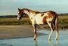 Love Letter (PhotOw'graphie) Tags: étalon horse poulain plage mer eau extérieur équitation cheval liberté animal