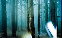 light leak (-Alberto_) Tags: redwoods foggy misty nature olympusxa2 35mmfilm kodakektar california