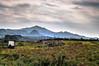 Paisaje con vacas (ccc.39) Tags: asturias ribadesella vacas montes