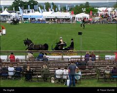 The English P5180024 Devon County Show (Trevor Durritt) Tags: candid ©trevordurritt people theenglish devon england farming animals agriculture olympusc7000z digitalcompactcamera horses camedia devoncountyshow