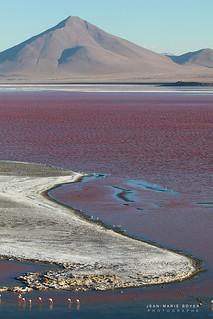 Laguna Colorada - Sud Lipez