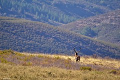 IMG_9814 (Ismael Cunha - Photography) Tags: montesinho selvagem portugal