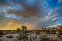 Pink Rain (East of 29) Tags: pinkrain sky drama desert joshuatreenationalpark mojaveyucca desertrain sunset