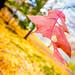 Boon!!! (Panjania) Tags: autumn