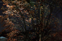 _MG_2711.CR2 (jalexartis) Tags: rhinorack pioneerplatform nightphotography night nightshots autumn lighting