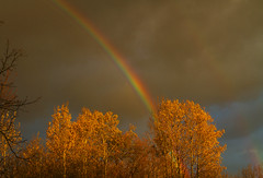 Good Thursday Morning! (Matt Champlin) Tags: goodmorning thursday home life nature landscape peace peaceful rainbow beautiful fall autumn colorful storm stormy canon 2017 skaneateles flx fingerlakes