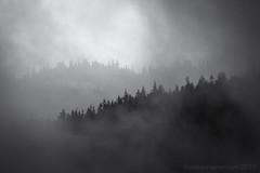 Foggy forest Squamish - (tristanrayner.com) Tags: green blackandwhite bw fog mist fall autumn winter seasons rain clouds pnw bc british columbia squamish