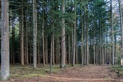 Ugchelse hondjes (doevos) Tags: bomen bos ugchelsebos veluwe woud