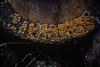 Bordüre (glasseyes view) Tags: glasseyesview wald forest tree struffelt detail einschlag abschnitt pilze
