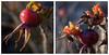 Pour les oiseaux (sosivov) Tags: sweden macro montage fruit berries red orange yellow dogrose autumn