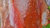 Angophora costata_2 (Tony Markham) Tags: angophoracostata sydneyredgum rustygum smoothbarkedapple blushing orange red pink colour color myrtaceae tree flowering flower inflorescence wisestrack royalnationalpark