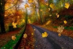 Journée d'automne -4130 (YᗩSᗰIᘉᗴ HᗴᘉS +10 000 000 thx❀) Tags: leave leaves feuille feuilles autumn season automne nature hensyasmine yasminehens road eu europa europe belgium