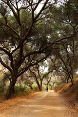 In A Quiet Way (Art By Pem Photography: Tao Of The Wandering Eye) Tags: fineartphotography canon canoneosrebelsl1 eos sl1 canonefs24mmf28stm california southerncalifornia socal nature naturepreserve trees outdoor beauty scenicsnotjustlandscapes scenery hiking usa