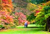 Westonbirt-1479-Edit (Claire Louise Carroll) Tags: acers arboretum autumn colour fall leaves maples seasonal seasons sky trees westonbirt