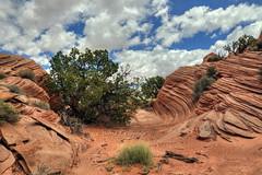 Secret mini-wave (Chief Bwana) Tags: az arizona pariaplateau vermilioncliffs navajosandstone psa104 chiefbwana secretpocket