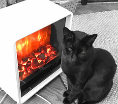 """It is the basic condition of life, to be required to violate your own identity. At some time, every creature which lives must do so."" ―Philip K. Dick 🔥🐈 (anokarina) Tags: appleiphone7 highlands louisville kentucky ky cat kitten kitty fireplace heater colorsplash blackcat animal"