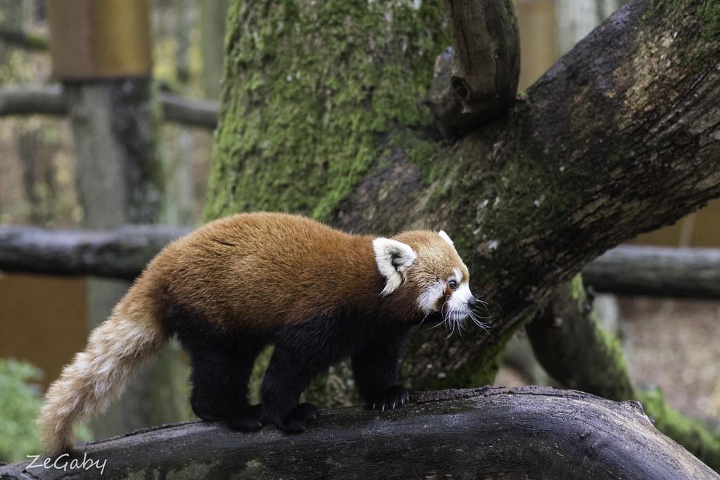 The World's Best Photos Of Firefox