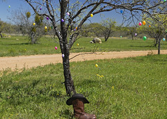 Shortest Cowboy in Texas 3 (Largeguy1) Tags: approved shortest cowboy texas landscape bluesky green easter tree black hat brown boots anon 5dsr