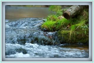 Stream in Johnson County