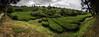 chá gorreana 2a 6p (Bilderschreiber) Tags: tea plantation chá gorreana sao miguel azores tee teeplantage plantage azoren portugal panorama europe europa