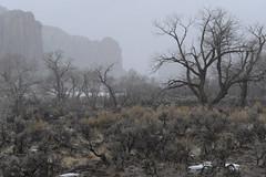 Indian Creek in the Winter Fog   NIKON D31436 (izurutoki) Tags: fog southwest utah redrockcountry indiancreek winterfog spirituallandscape
