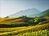 vineyard (Katarina 2353) Tags: switzerland vineyard sion autumn alps katarina2353 katarinastefanovic