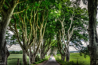 The Dark Hedges. Bregagh Road. Roots to heaven.