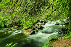 IMG_6965-1 (Andre56154) Tags: schweden sweden sverige wasser water wald forest bach ufer