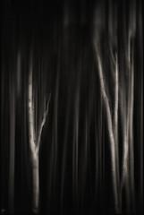 ghost forest (Kati471) Tags: bäume wals forest ghostforest nienhagen woods blackwhite schwarzweiss modernart