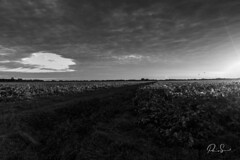 first caresses of daylight (Paio S.) Tags: sky daylight light landscape amanecer campo canon argentina monochrome blackwhite noir blanco negro field countryside bw