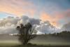 A lonely tree shrouded in mist (* mariozysk *) Tags: tree drzewo mgły mgła mist evening wieczór fields pola poland polska mikołajki