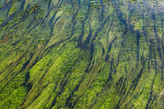 Vision 365 #317 (delikizinyeri) Tags: green color vision365 river weeds salamanca spain