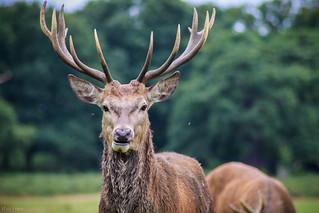 Oh deer oh deer