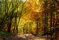 DSC_1908 (FMAG) Tags: 2017 żabieniec zalesie jesien