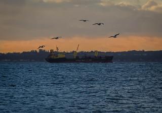 Birds and a Bulgarian bulk carrier