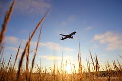 Early morning planespotting (Artyom Anikeev) Tags: avia aviation airplane artyomanikeev anikeev airliner planespotting spotting canon sheremetyevo svo uuee airbus a321 morning