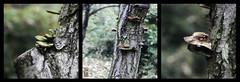 Triptyque (TchinChine !) Tags: chine jiangsu changzhou liyang champignons fongus