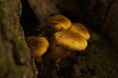 Magic (De Rode Olifant) Tags: mushroom marjansmeijsters fungus autumn nature