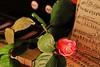 _MG_0025d - 20.06.2017 (hippo1107) Tags: rose klavier tasteninstrument streichinstrument geige violine musik stillleben flower blume canoneos70d canon eos 70d juni 2017 music