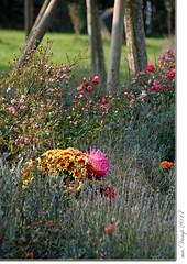 Naturfriedhof am Weinberg (Mr.Vamp) Tags: friedhof tand bayer naturfriedhofamweinberg naturfriedhof weinberg mrvamp vamp bayern ruhestätte letzterort ruhe loslassen trauer tränen erinnerungen cemetery naturecemetery vineyard bavaria restingplace lastplace rest lettinggo sadness tears memories