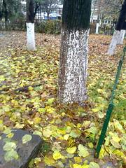 Fotografie54934 (chicore2011) Tags: memories birds littlepark tree leaves roots