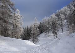 col des Planches (bulbocode909) Tags: valais suisse coldesplanches montchemin montagnes nature arbres forêts mélèzes automne givre brume stratus bleu neige sentiers traces