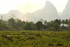 2017_04_21VangVieng18 (Andi [アンデイ]) Tags: laos travel travelphotography street streetphotography seasia southeastasia lao newyear savhannaket vientiane vangvieng luangprabang canon sigma sigmaa nature village rural buddhism
