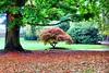 Autumn in Tivoli park, Mechelen, Belgium (jackfre 2) Tags: belgium mechelen tivolipark domain autumn fallcolours