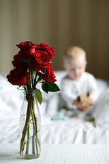 little one (dzinska) Tags: roses flowers children littleone sweetheart cozy babyboy baby little kitchen beauty childhood tasty white